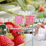 台灣【苗栗】一起去採草莓、雪霸森林單車&健走1日