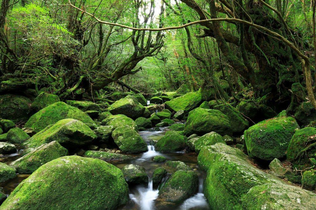 百岳健走,日本百大名山